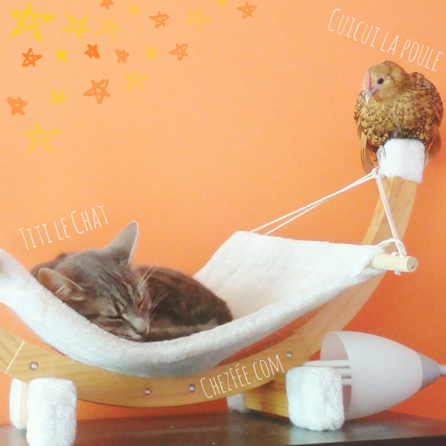 cuicui-poule-domestique-pet-chicken-cat-appartement-sebright-chat-france-chezfee-kawaii